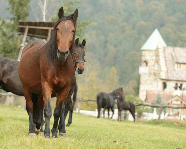 Der Töchterlehof bei Anger in der Steiermark