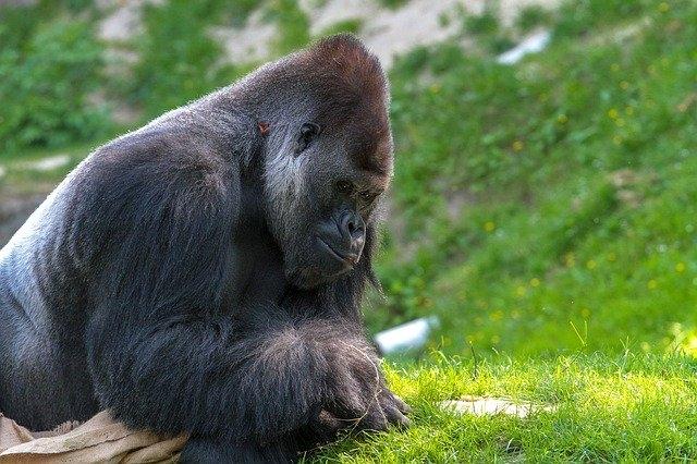 Zoo Schmiding