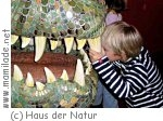 Tiere der Vorzeit im Haus der Natur