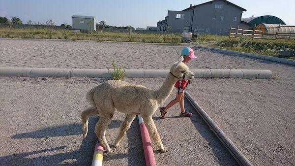 Alpaka Kindergeburtstag