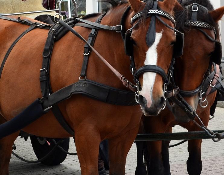 Symbolfoto Pferde-Kutschenfahrt in Illmitz