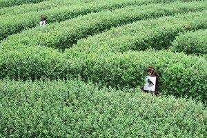 Labyrinth und Weidenspielplatz in Hirschstetten