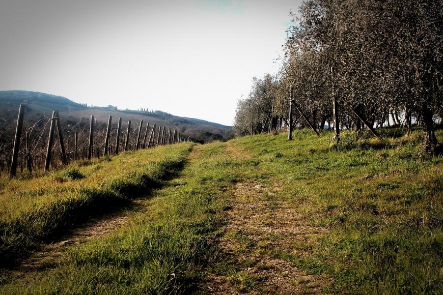 Weinwanderweg Zagersdorf