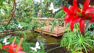Palmenhaus der Blumengärten Hirschstetten