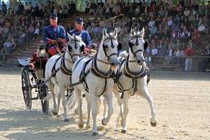 Lipizzaner-Viergespann aus Piber beim großen Pferdefest auf Schloss Hof