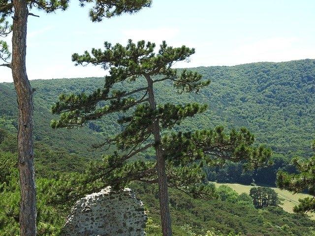Föhrenwald