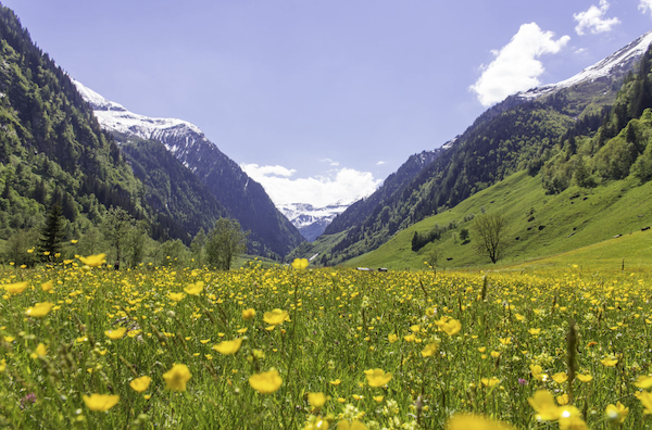 Blumenwiese Rauris