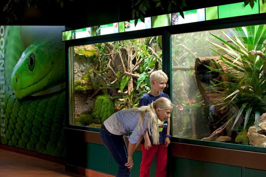 Zu Besuch bei den Reptilien