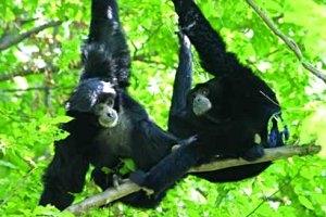 Tierwelt Herberstein Kindergeburtstag