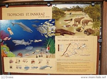 Nußdorf Geologie - Lehrpfad