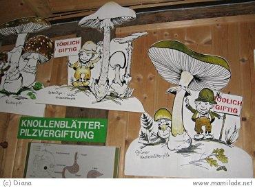 Pilz-Wald-Wunderwelt