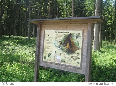 Waldlehrpfad Hofau in Mattighofen