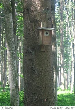 Vogelkundeweg Gutau