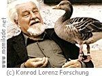 Konrad Lorenz Forschungsstelle in Grünau