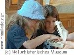 Sommerprogramm im Naturhistorischen Museum