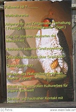 Burgfalkerei Oberkapfenberg