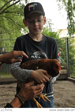 Vienna Kids Farm Kgb