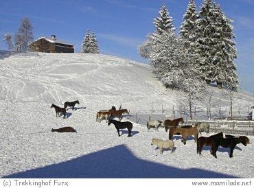 Trekkinghof Furx