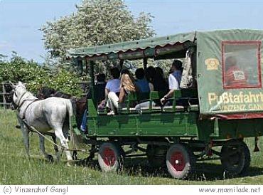 Vinzenzhof Gangl in Illmitz: Pferdewagen- u. Kutschenfahrten