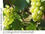 Fest der 1.000 Weine in Eisenstadt