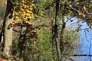Lehrpfad UferNatur in Bregenz (c) Diana