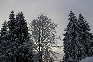 Winterwanderung in Faistenau, copyright: Diana