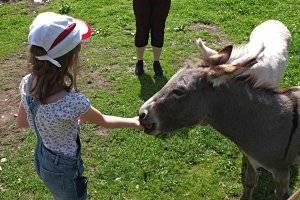 Minigolf und Tiere auf der Grill-Ranch in Deutsch-Wagram (c) PB