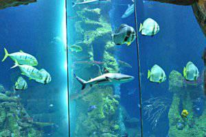(c) Haus des Meeres