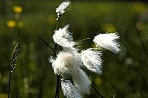 Themenweg Wollgras, copyright: Nationalpark Kalkalpen