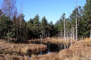 Koppler Moor Wanderung, copyright: TV Koppl
