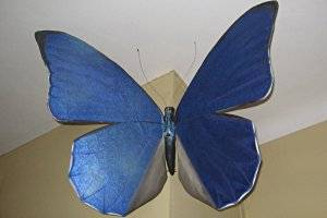 Schmetterling Erlebnisweg in Maria Alm, copyright: Diana
