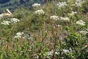 Natura Trail Sablatnigmoor, copyright: Diana