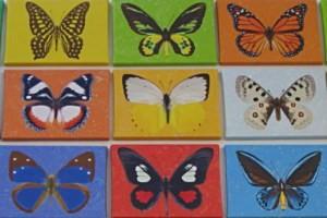 Schmetterlingswanderweg Pfarrkirchen, copyright: Diana