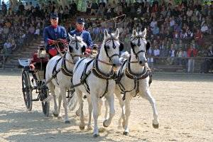 Pferdefest auf Schloss Hof - Lipizzaner-Viergespann aus Piber © Piber