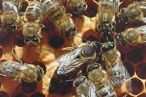 Bienenlehrpfad in Reith (c) Olympiaregion Seefeld