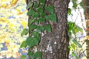 Lebensbaumpfad in St. Georgen, copyright: Diana
