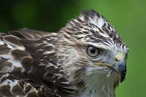 (c) Greifvogelpark Telfes