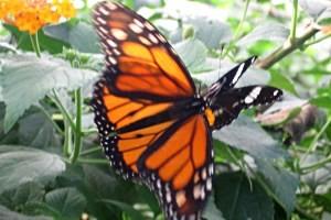 Schmetterlingslehrpfad Uttendorf, copyright: Diana