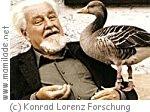 Konrad Lorenz Forschungsstelle Grünau