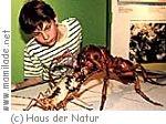 Salzburg Haus der Natur Insekten