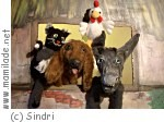 Salzburg Sindri Bremer Stadtmusikanten