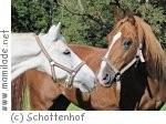 Schottenhof Osterferienkurs