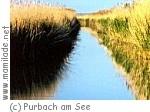 Schilflehrpfad in Purbach am See ü
