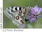 Schmetterling - Sonderausstellung in der inatura in Dornbirn
