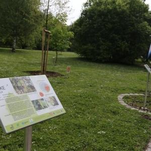 Allergiegarten Oberlaa