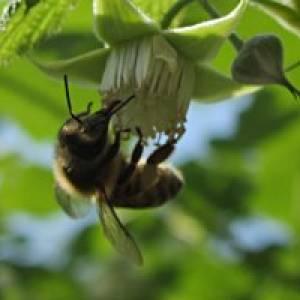 Wald- und Bienenlehrpfad Baldramsdorf