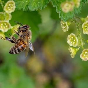 Bienenlehrpfad in Reith St. Andrä