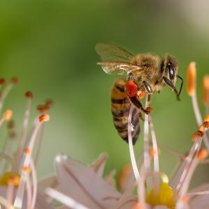 Symbolfoto Bienenerlebnisweg Langau