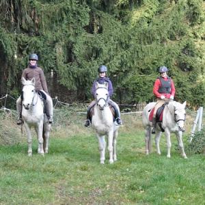 Pferdegestütze Therapie