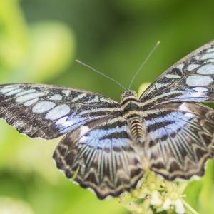 Symbolfoto Schmetterlingspfad am Cobenzl